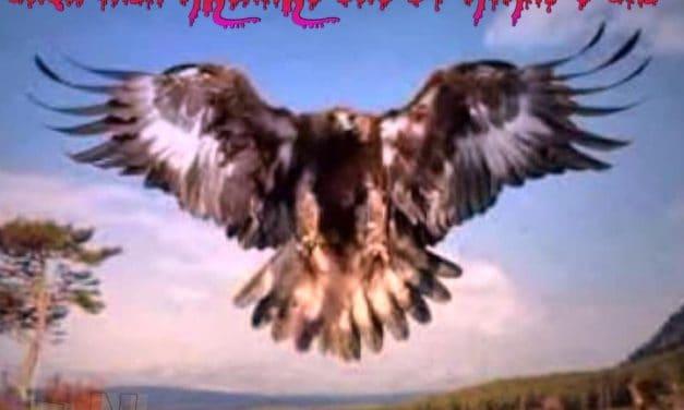 Shqiponja krenare dhe dy kokat e saj